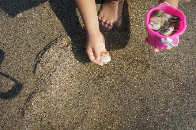 蛤を取る手の写真